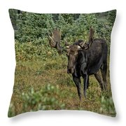 Moose In Shrubs Throw Pillow