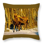 Moose In The Morning Throw Pillow