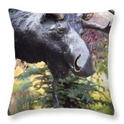 Moose In Vail Throw Pillow