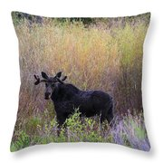 Moose In Velvet Throw Pillow