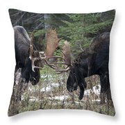 Moose. Males Fighting During The Rut Throw Pillow