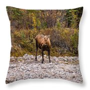 Moose Pawses In Mid-drink Throw Pillow
