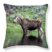 Moose Yellowstone Np_grk6918_05222018 Throw Pillow