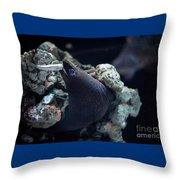 Moray Eel Eating Little Fish Throw Pillow