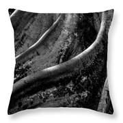 Moreton Bay Fig In Bw Throw Pillow