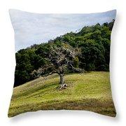 Morgan Territory Oak Throw Pillow