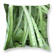 Morning Dew Drops  Throw Pillow