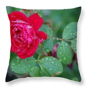 Morning Dew On A Rose Throw Pillow
