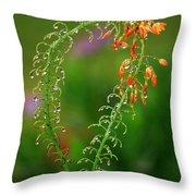Morning Dew On Orange Flowers Throw Pillow