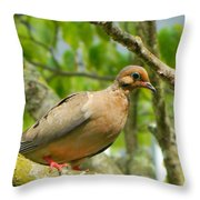 Morning Dove Throw Pillow