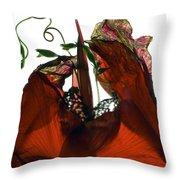 Morning Glory Canna Red Throw Pillow