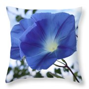 Morning Glory Delight Throw Pillow