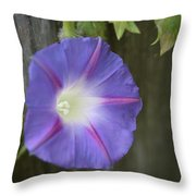 Morning Glory On Fence Throw Pillow