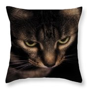 Morning Kitten  Throw Pillow