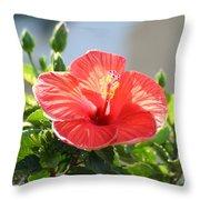 Morning Light Hibiscus Throw Pillow