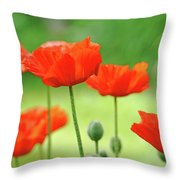 Morning Light Poppies Throw Pillow