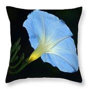 Morning Magic Throw Pillow