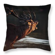 Morning Stag Throw Pillow