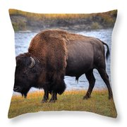 Morning Stroll Along The Madison Throw Pillow