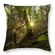 Morning Stroll In The Forest Throw Pillow