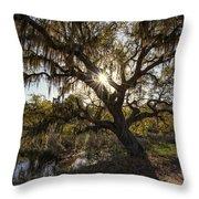 Morning Sun Through The Oak Throw Pillow