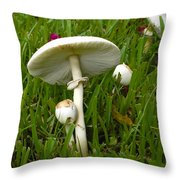 Morning Surprise Throw Pillow