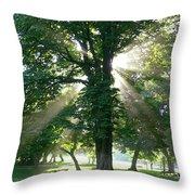 Morning Tree Throw Pillow