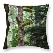 Moss-draped Trees On Tiger Mountain Wt Usa Throw Pillow