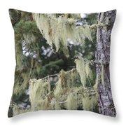 Moss On Pine Throw Pillow