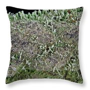 Moss Trees Throw Pillow