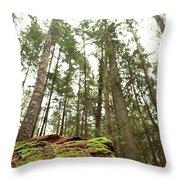 Moss Under The Cedars Throw Pillow