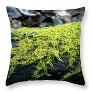 Mosss On Blackened Log Throw Pillow