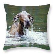 Mossy Moose Throw Pillow