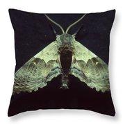 Moth At Texaco Station Throw Pillow