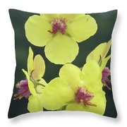Moth Mullein Wildflowers - Verbascum Blattaria Throw Pillow