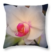 Moth Orchid 1 Throw Pillow by Kate Word