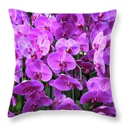 Moth Orchid Exuberance Throw Pillow
