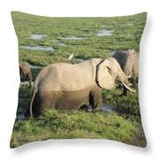 Mother And Calves Throw Pillow