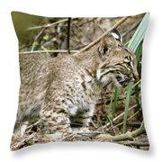 Mother Bobcat Throw Pillow