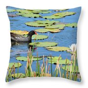 Mother Moorhen Throw Pillow