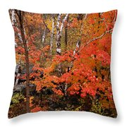 Mother Nature's Palette Throw Pillow