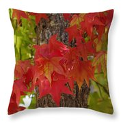 Mother Nature's Style Throw Pillow