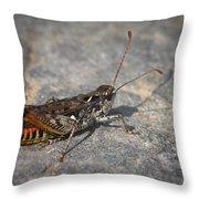 Mottled Grasshopper Throw Pillow