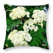 Mountain Ash Blossoms Throw Pillow