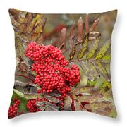 Mountain Ash With Berries Throw Pillow