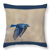 Mountain Bluebird Male In Flight Throw Pillow