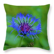 Mountain Cornflower Throw Pillow by Byron Varvarigos
