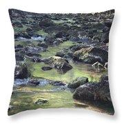 Mountain Creek Nature Spring Scene Throw Pillow