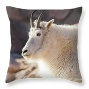 Mountain Goat Billy Basks In The Morning Sun Throw Pillow