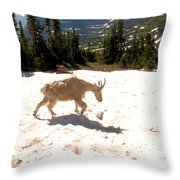 Mountain Goat Crossing A Snow Patch Throw Pillow